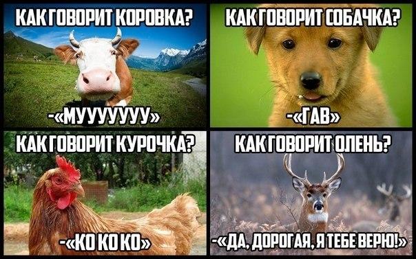 Наивный олень