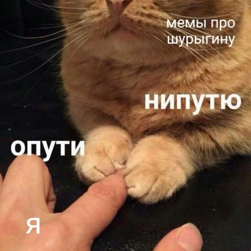 опути непутю мем, мемы опути непутю, опути нипутю, опути нипутю мем, мемы опути нипутю