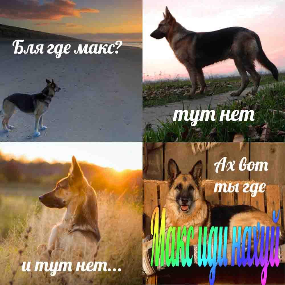 макс иди нахуй собака