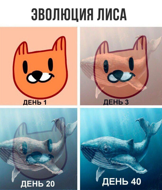 рыжий лис игра, рыжий лис мемы, что за рыжий лис, рыжий лис вк, мемы с рыжим лисом, рыжий лис синий кит, свежие мемы, какой мем популярен, стикеры вк, как получить стикер лис