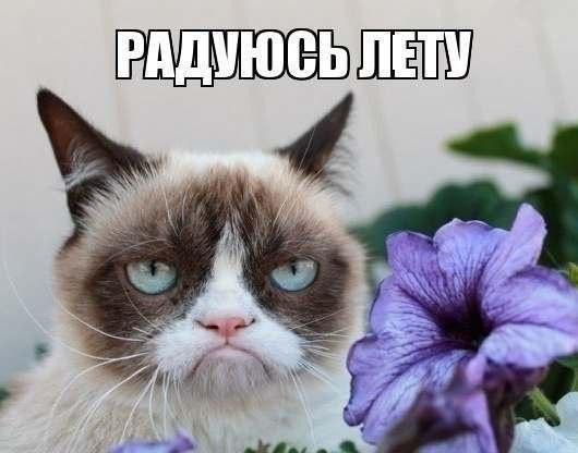 угрюмая кошка, сердитая кошка, грустная кошка, мем нет с котом, родители Grumpy cat, родители сердитого котика, почему Grumpy cat так выглядит, почему грампи кэт так выглядит, почему сердитый котик так выглядит, почему у сердитого котика такая морда, грампи кэт, грампи кет, Tardar Sauce, tard, tartar sauce, grumpy cat, sad cat. угрюмый кот, сердитый кот, злой кот, печальный кот, сердитый котик, мем с котом, угрюмый кот мем, откуда мем угрюмый кот, откуда мем сердитый кот