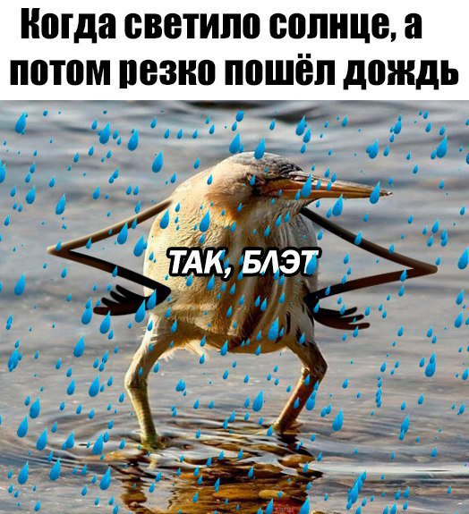 так блэт, так блэт мем, так блэд, птица с руками, киви с руками, блэт, так блэт птица,