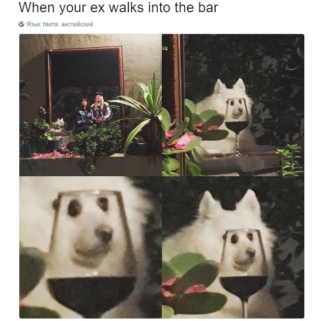 собака в стакане