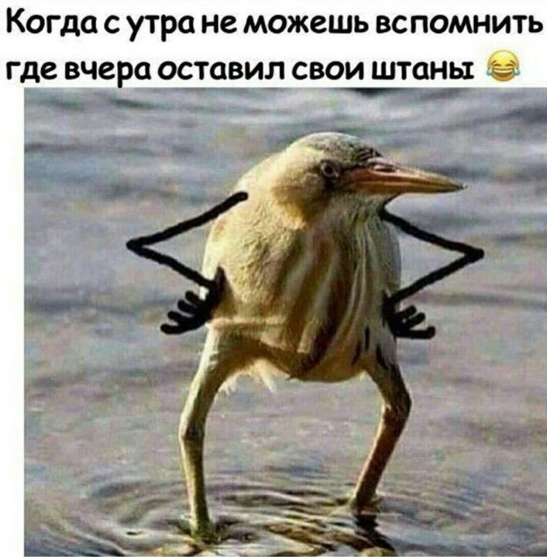 так блэт, так блэт мем, так блэт птица, так блэт оригинал,