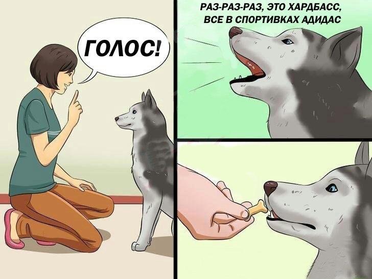 мем собака говорит