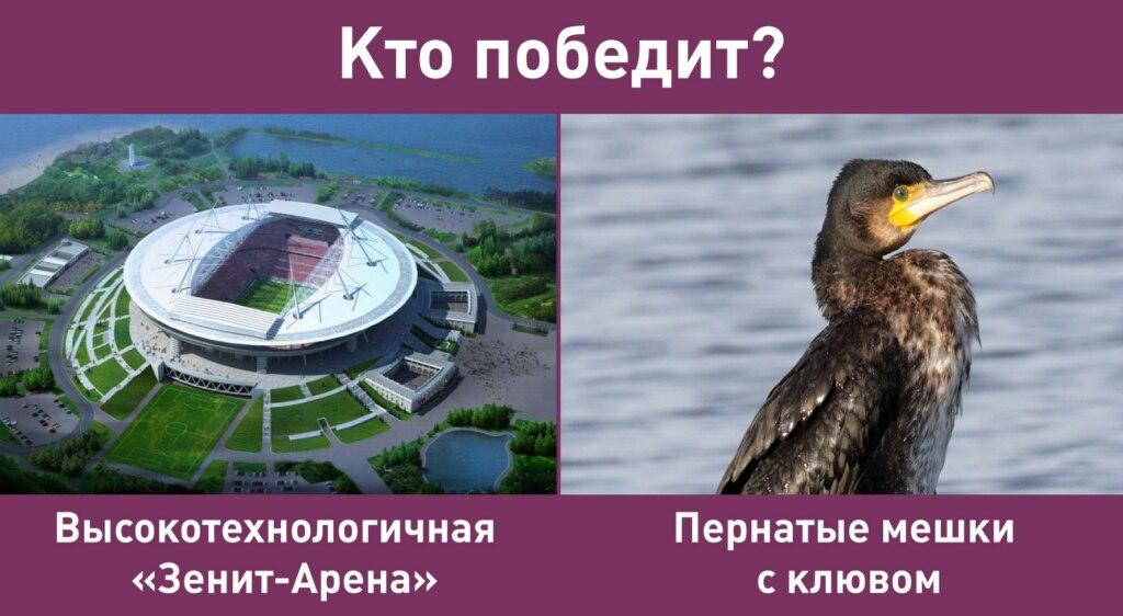 бакланы стадион (9)