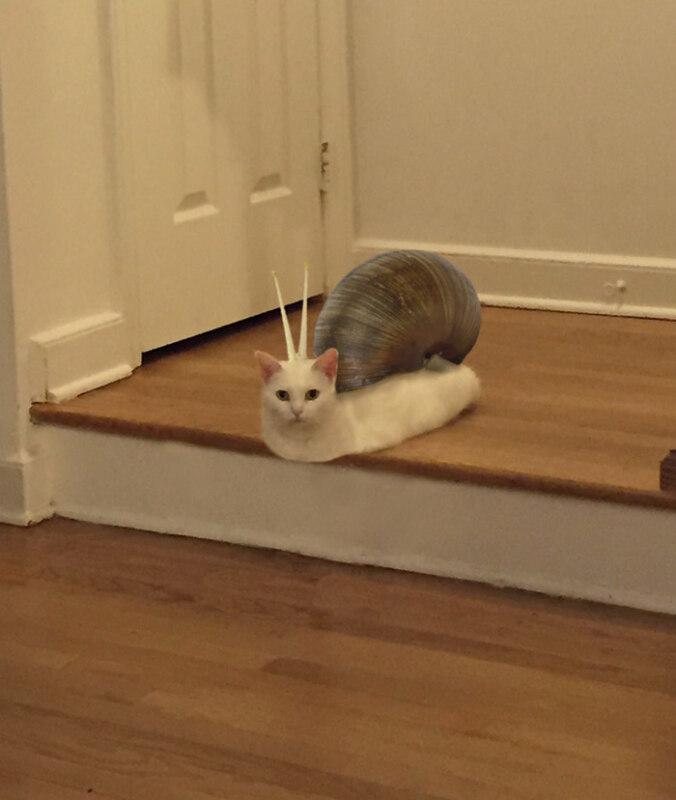 жидкий кот (5)