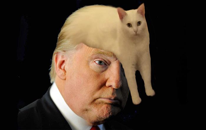 жидкий кот (7)