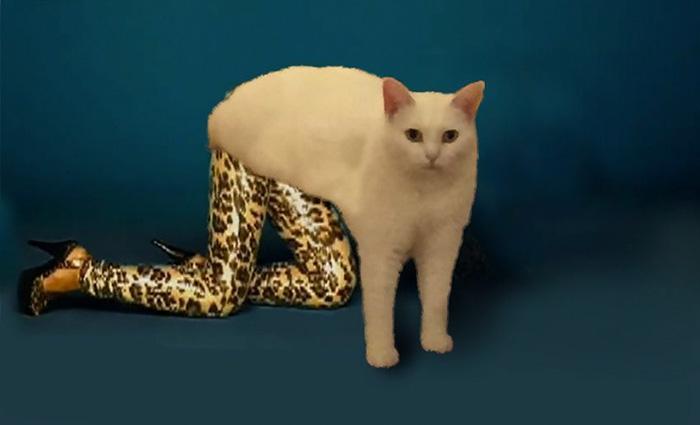 жидкий кот (8)