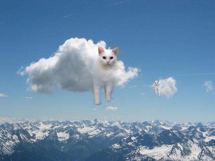 жидкий кот (9)