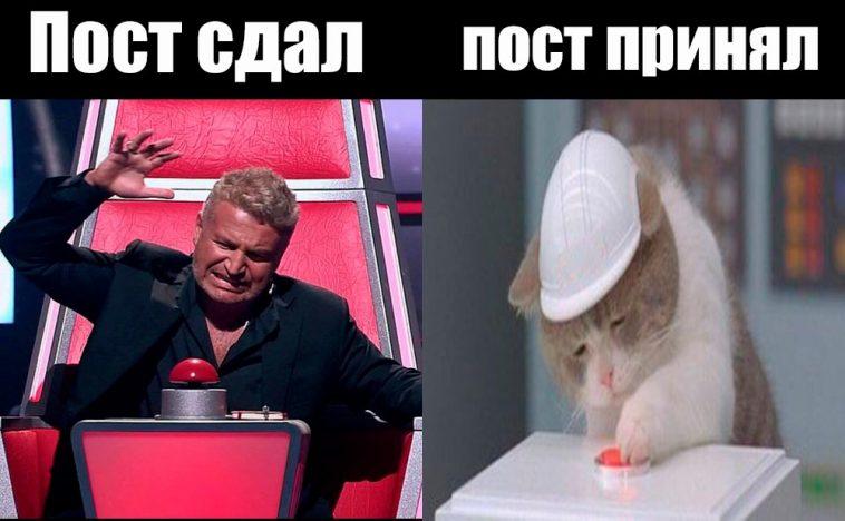 кот и красная кнопка