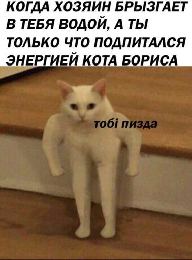 кот качок мем (3)