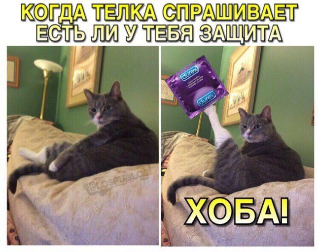 кот хоба