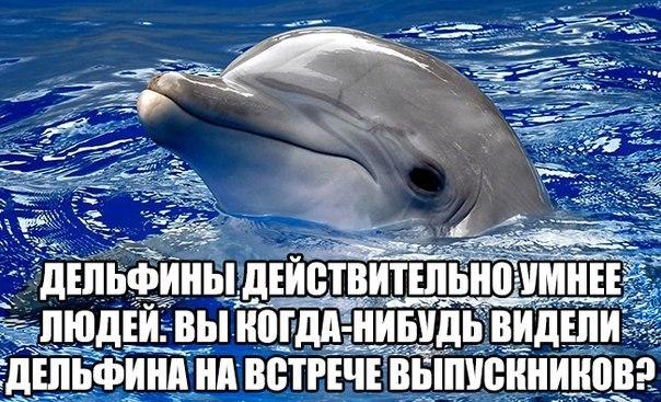 мемы про дельфинов (2)