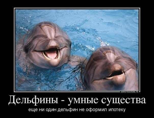 мемы про дельфинов (3)