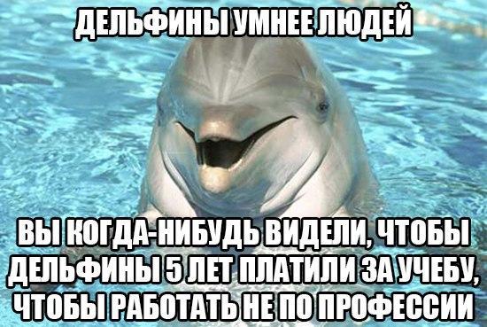 мемы про дельфинов (4)
