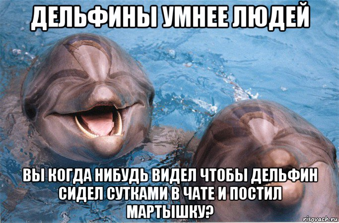 мемы про дельфинов (5)