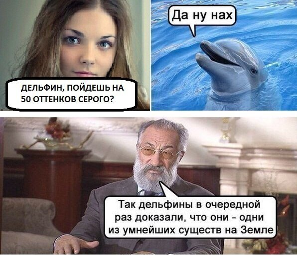 мемы про дельфинов (6)