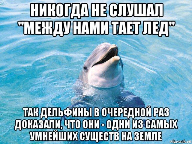 мемы про дельфинов (7)