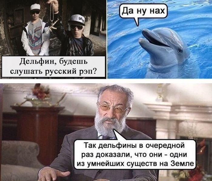 мемы про дельфинов (8)