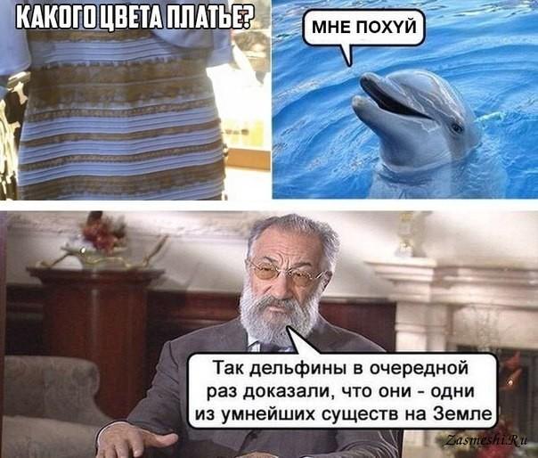 мемы про дельфинов (9)