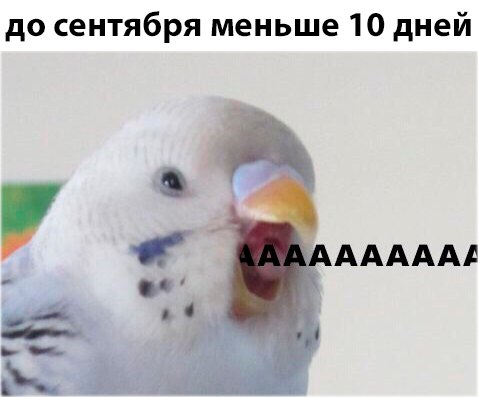 мемы про 1 сентября (4)