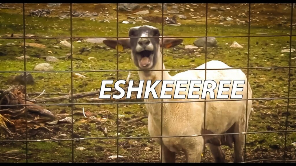 эшкере (3)