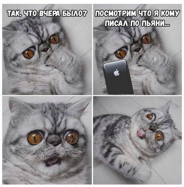 кот кусает лапку мем (1)