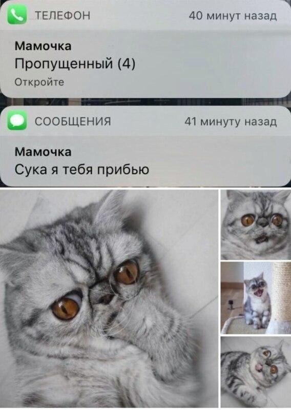 кот кусает лапку мем (3)