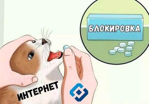 кот с таблетками мем (1)