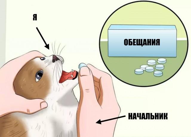 кот с таблетками мем (4)