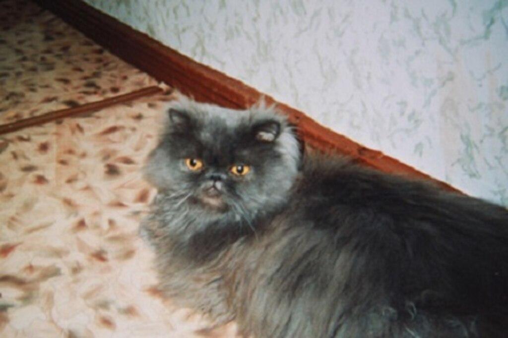 кот яшка