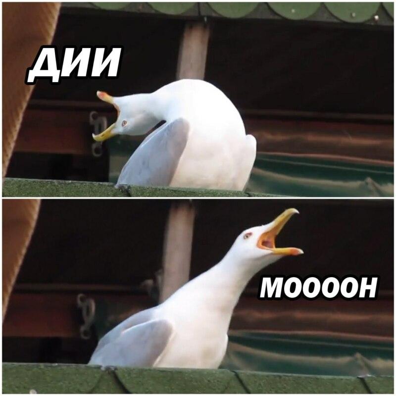 мем чайка кричит (5)