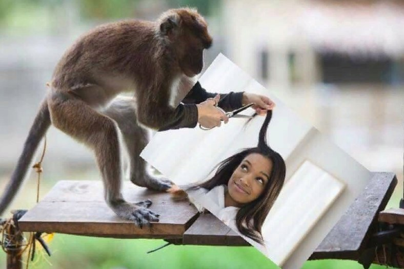 обезьяна в парикмахерской картинки жизни этой