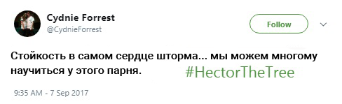 гектор пальма, пальма гектор, мемы про гектора, hector, hector the tree, hectorthetree, save hector, savehector
