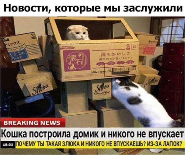 срочные новости с животными шаблон (1)