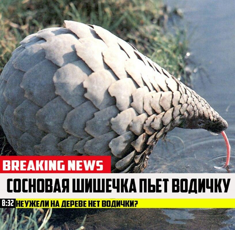 срочные новости с животными шаблон (2)