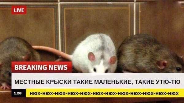 срочные новости с животными шаблон (4)