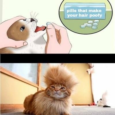 таблетки для кота (3)