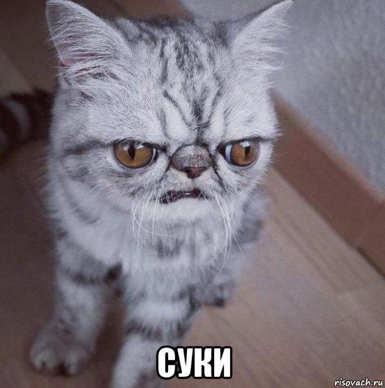 хмурый кот мем (2)