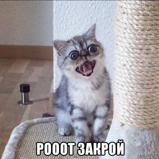 хмурый кот мем (3)