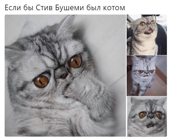 хмурый кот мем (4)