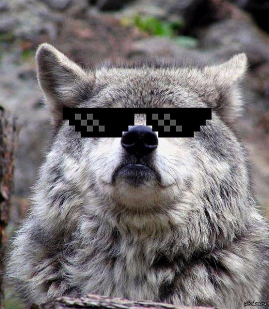 Кот в очках мем