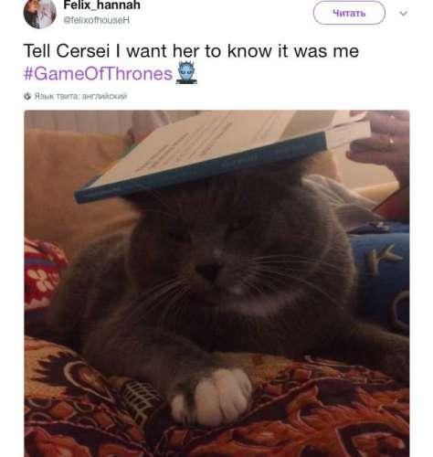 В августе, после выхода Серии со смертью последней из Тиреллов в твиттере появилась фотография кошки со шторой на голове и последними словами Оленны.