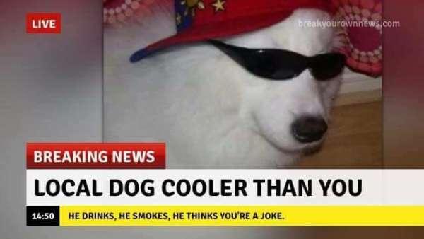 breaking news с животными мем (1)
