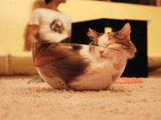 шнобелевка, шнобелевская премия 2017, коты это жидкость, кошки это жидкость, жидкие коты, мемы с котиками, мемы с котами, не ешь подумай, не еш подумой, почему коты это жидкость, смешные коты, коты в вазах и банках