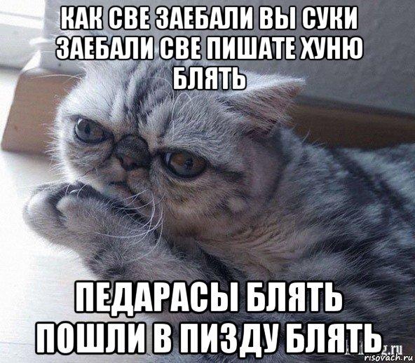 кот как же вы заебали