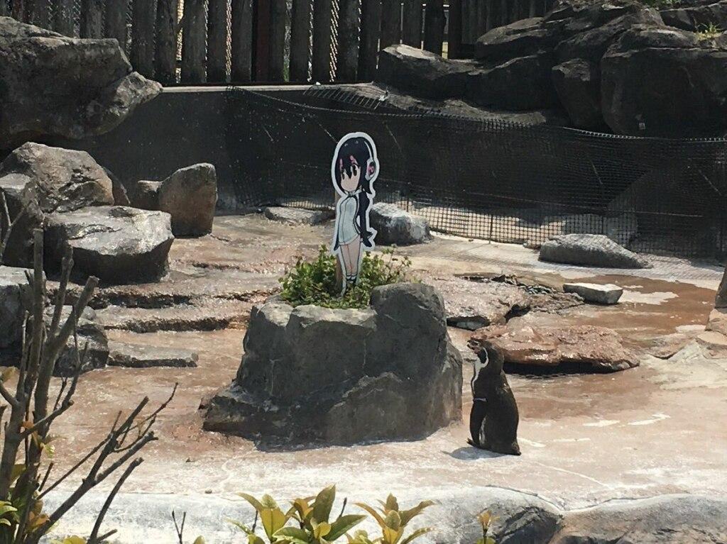 Грейп-Кун, грэйп-кун, влюбленный пигвин, влюбленный пингвин умер, пингвин умер, пингвин и хулулу, пингвин и девочка, пингвин и аниме, хулулу аниме