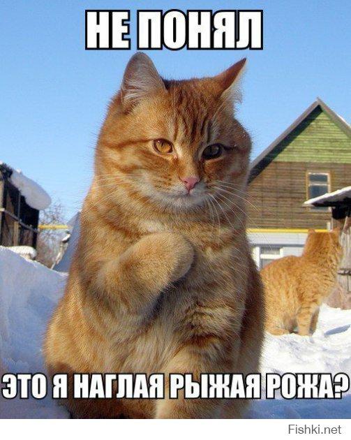 где живет доброта мем, котик где живет доброта, где живет доброта, котик где живет теплота, котик где мем, мем котик где, котик туть, котик туть откуда мем, котик туть шаблон, котик туть оригинал, история мема туть, мем туть, мем с котенком, серый котенок картинка, котик где мем, котик где туть, котик где туть мем