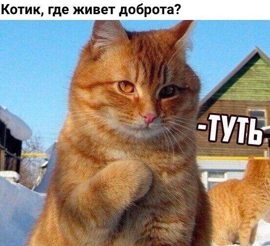 Котик где живет доброта?